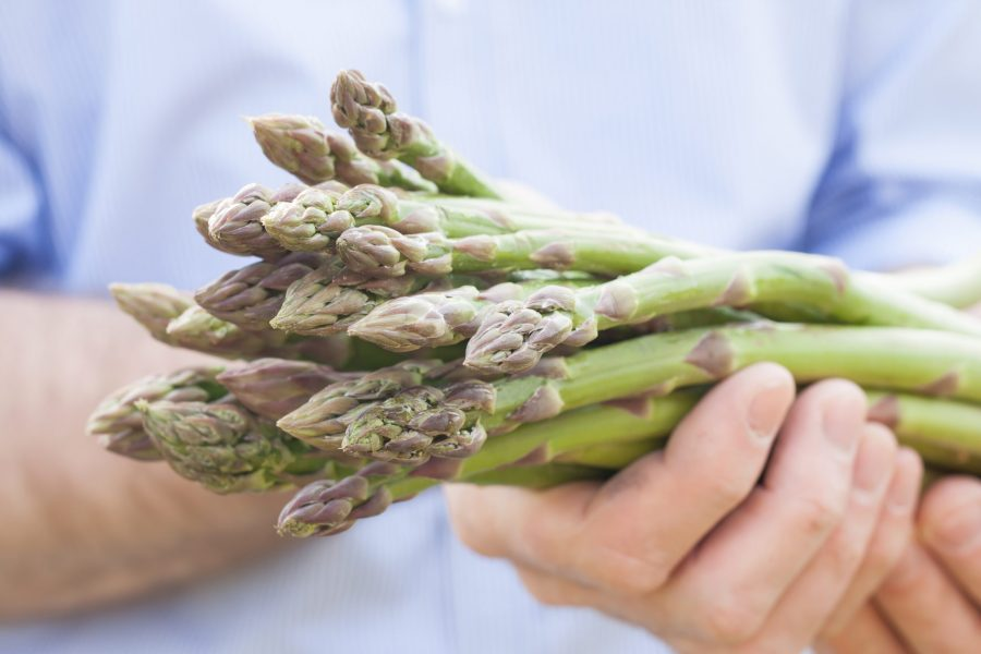 Bunch of green asparagus in gardener's hands close up. Spring - fresh harvest from the garden.